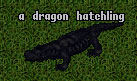 Evolution Dragon Lava Lizard